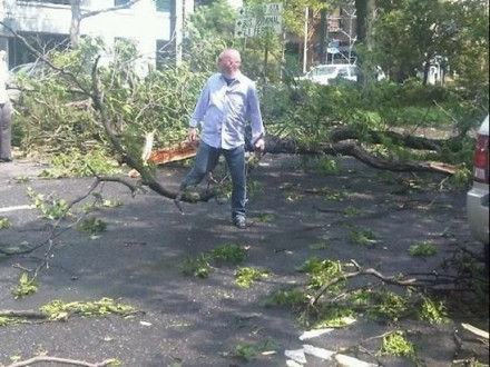 Downed Tree