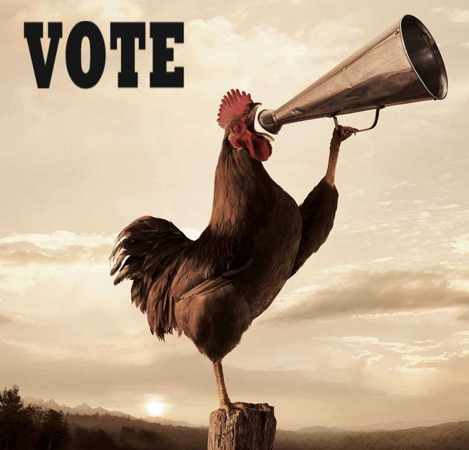 rooster vote