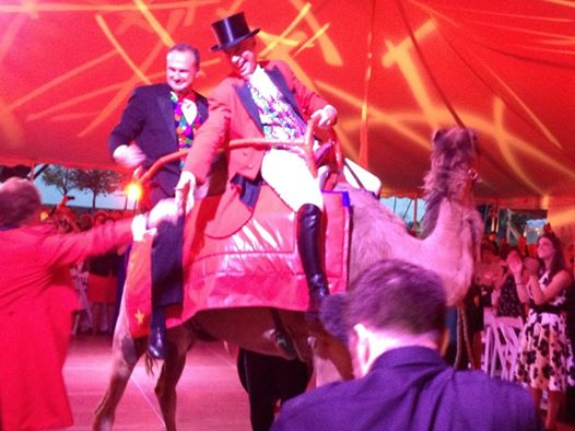 Stafstrom, Murphy on camel