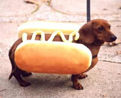 wiener-dog hotdog
